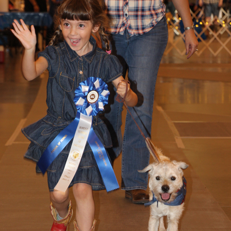 Border Terrier and little girl in Parade of Honor