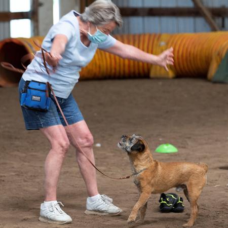 Border Terrier being praised in training