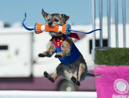Activities with Your Border Terrier