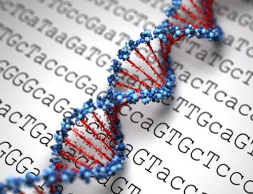 The Effects of Genetic Testing: Constructive or Destructive?
