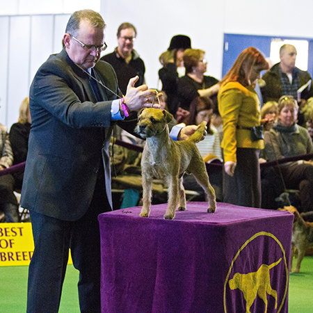 MBISS MBIS AOM GCH EX Can GCH Am Benchmarks Winning Goal at 2015 Westminster